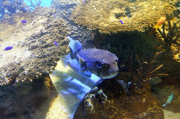 jud à Hiroshima - aquarium de Miyajima